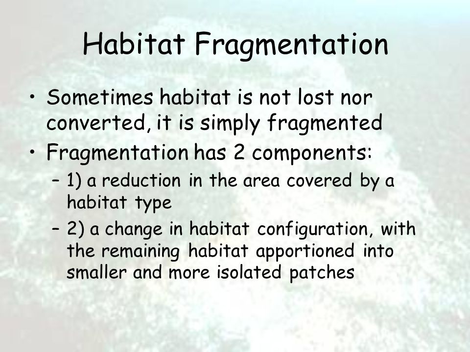 Habitat Fragmentation Sometimes habitat is not lost nor converted, it is simply fragmented Fragmentation has 2 components: –1) a reduction in the area covered by a habitat type –2) a change in habitat configuration, with the remaining habitat apportioned into smaller and more isolated patches