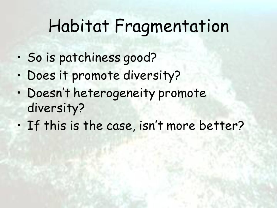 Habitat Fragmentation So is patchiness good. Does it promote diversity.