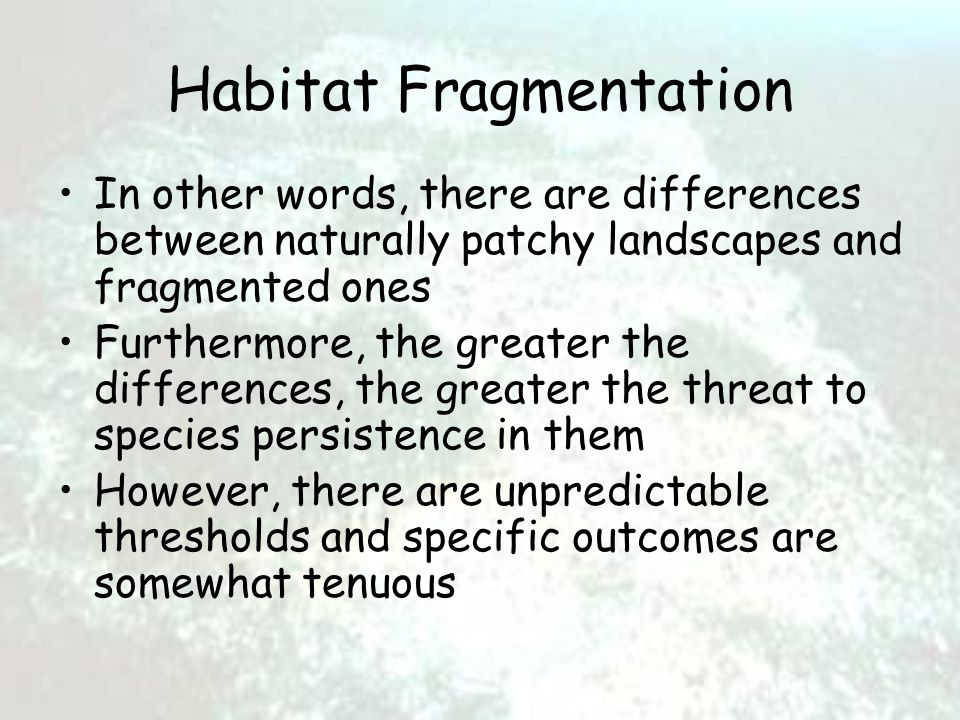 Habitat Fragmentation In other words, there are differences between naturally patchy landscapes and fragmented ones Furthermore, the greater the differences, the greater the threat to species persistence in them However, there are unpredictable thresholds and specific outcomes are somewhat tenuous