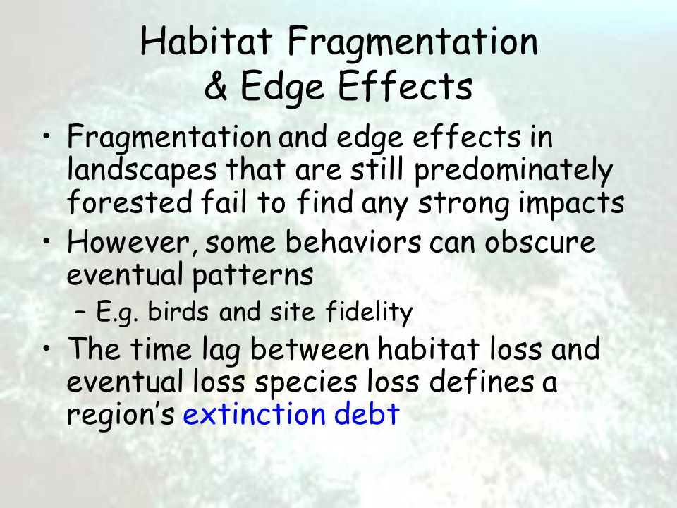 Habitat Fragmentation & Edge Effects Fragmentation and edge effects in landscapes that are still predominately forested fail to find any strong impacts However, some behaviors can obscure eventual patterns –E.g.