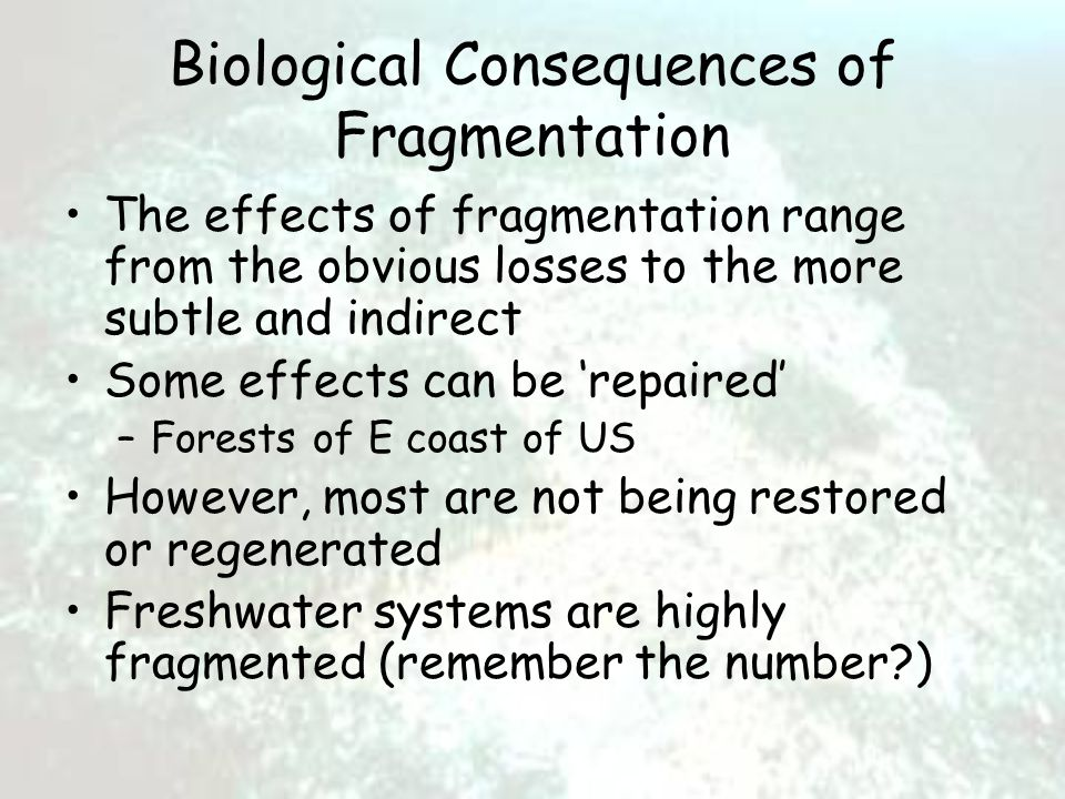 Biological Consequences of Fragmentation The effects of fragmentation range from the obvious losses to the more subtle and indirect Some effects can be 'repaired' –Forests of E coast of US However, most are not being restored or regenerated Freshwater systems are highly fragmented (remember the number?)