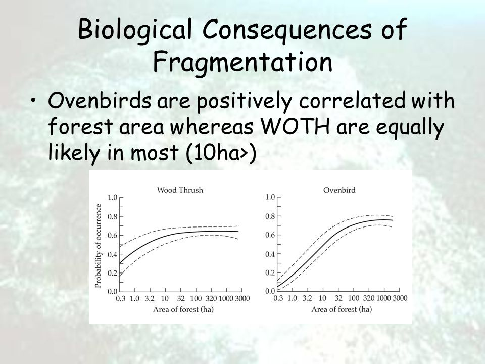 Biological Consequences of Fragmentation Ovenbirds are positively correlated with forest area whereas WOTH are equally likely in most (10ha>)