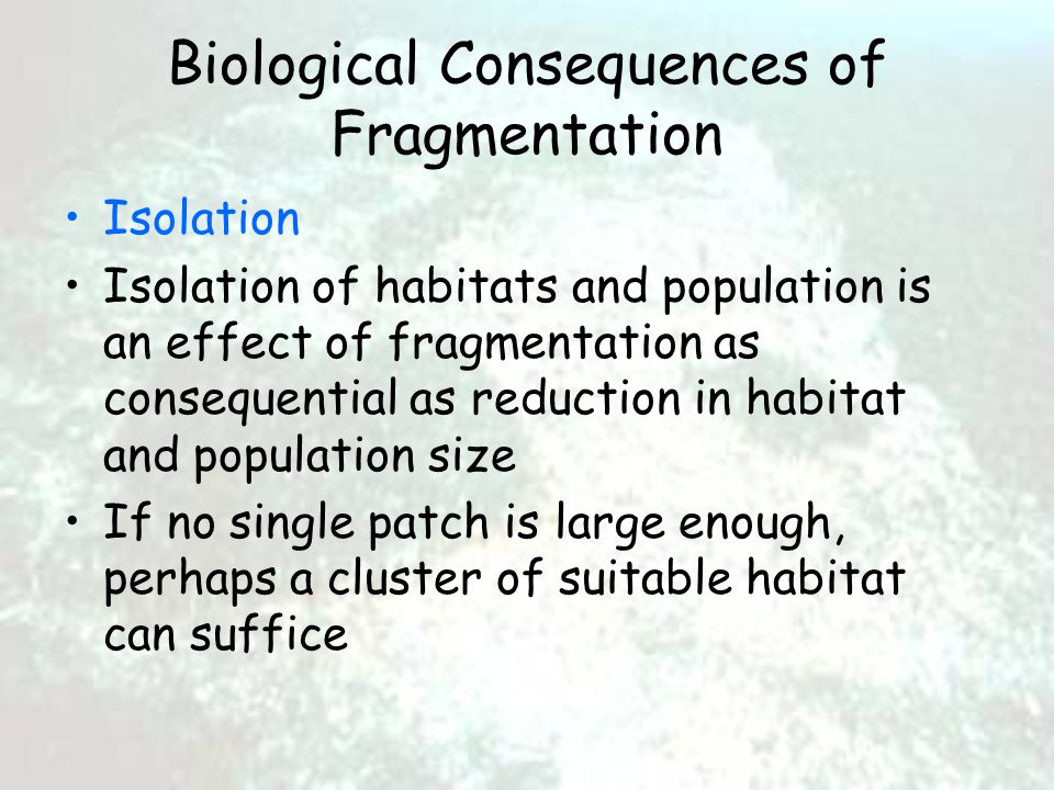 Biological Consequences of Fragmentation Isolation Isolation of habitats and population is an effect of fragmentation as consequential as reduction in habitat and population size If no single patch is large enough, perhaps a cluster of suitable habitat can suffice