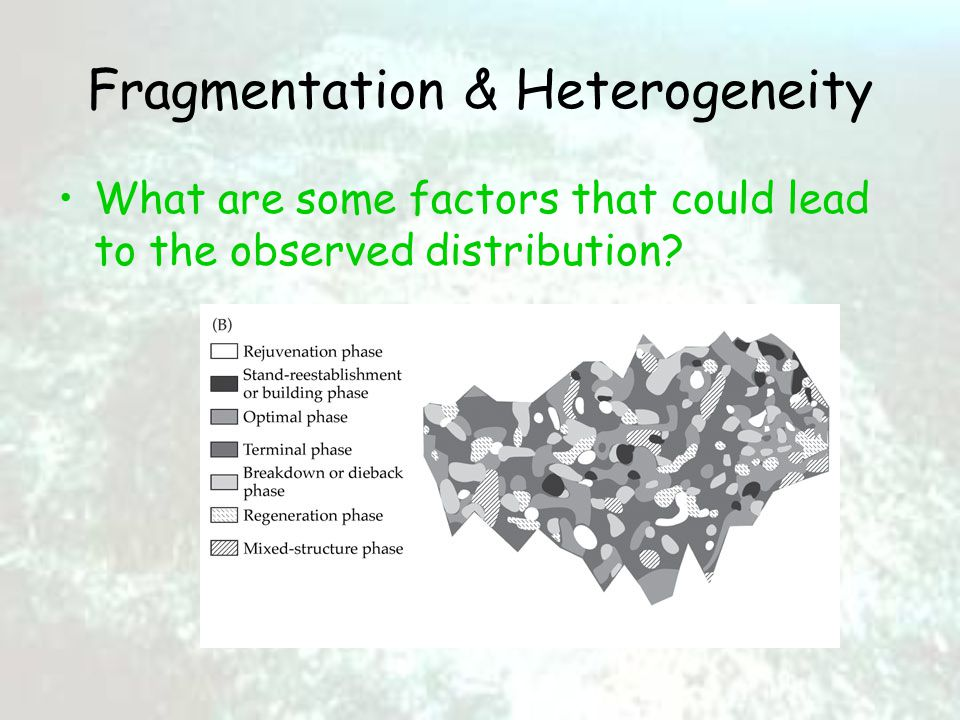 Fragmentation & Heterogeneity What are some factors that could lead to the observed distribution