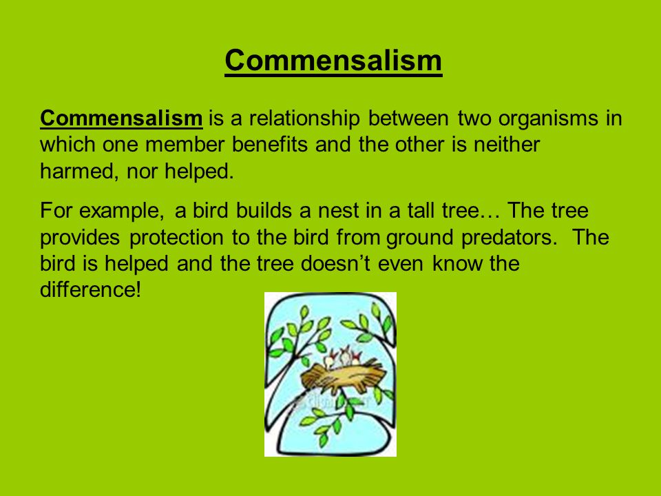 Commensalism Commensalism is a relationship between two organisms in which one member benefits and the other is neither harmed, nor helped.