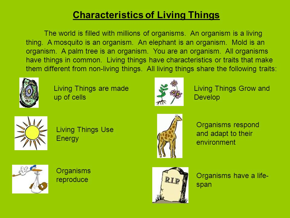 Characteristics of Living Things The world is filled with millions of organisms.