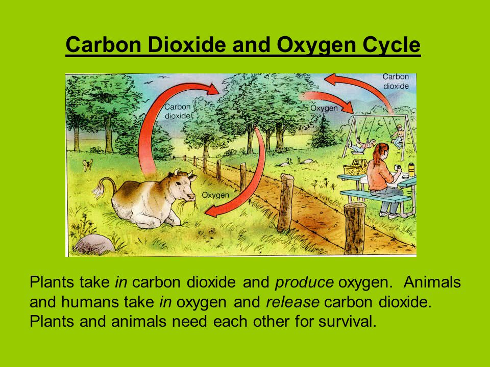 Carbon Dioxide and Oxygen Cycle Plants take in carbon dioxide and produce oxygen.