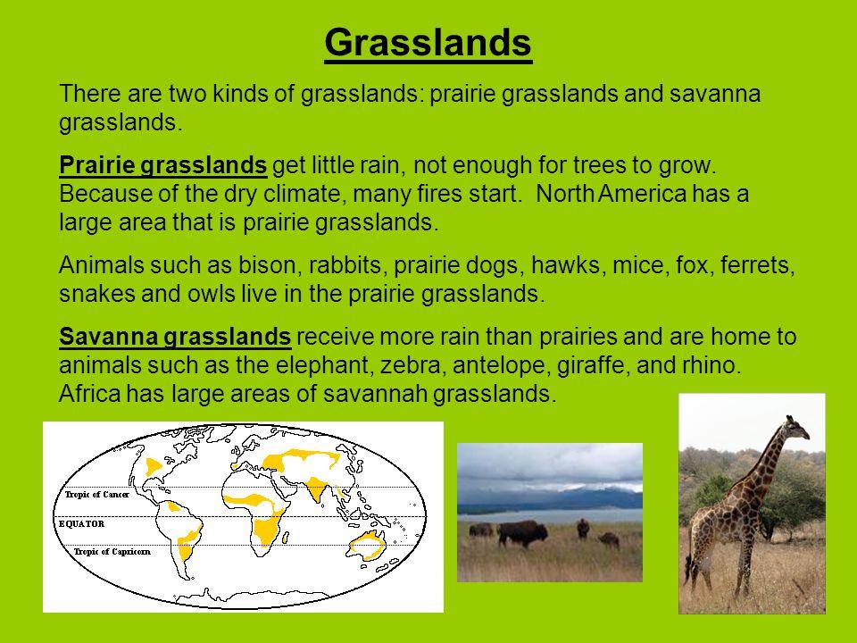 Grasslands There are two kinds of grasslands: prairie grasslands and savanna grasslands.