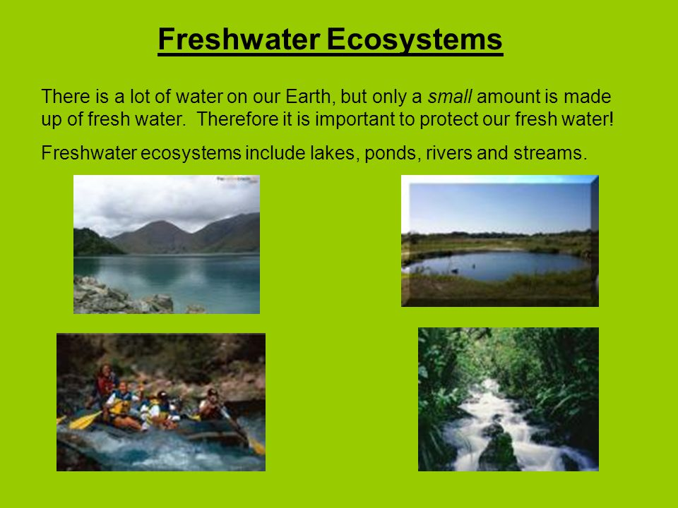 Freshwater Ecosystems There is a lot of water on our Earth, but only a small amount is made up of fresh water.