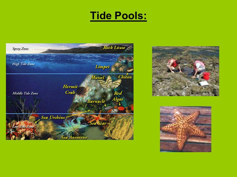 Tide Pools: