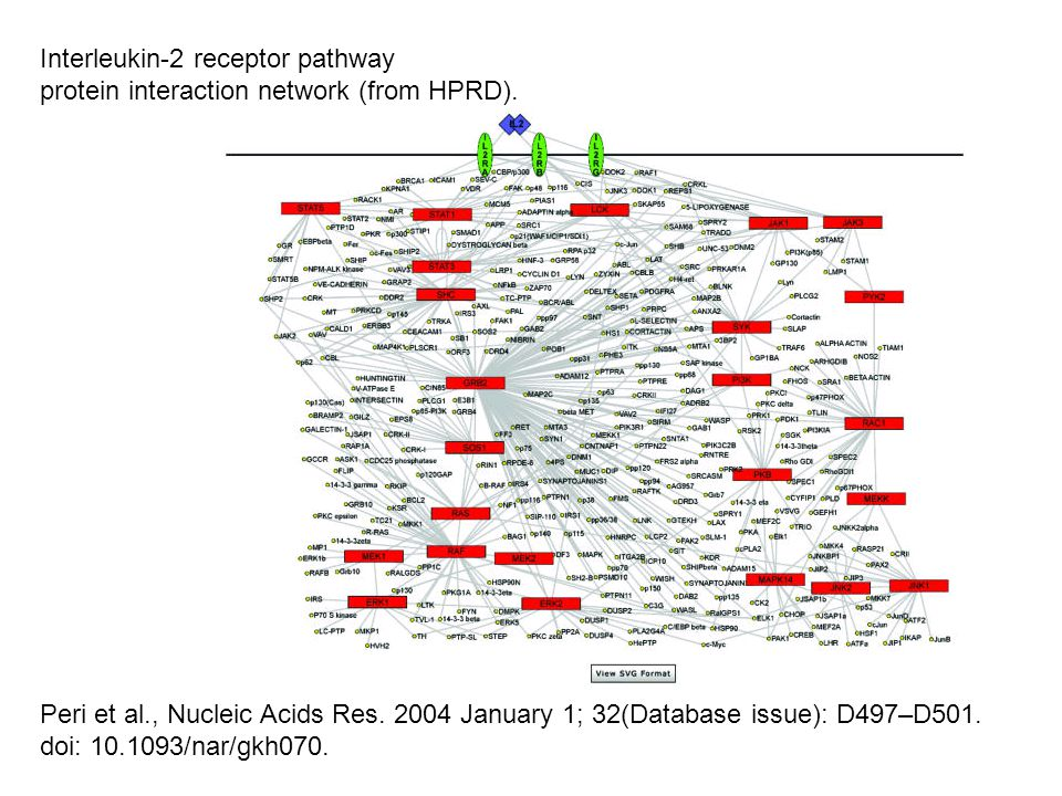 Peri et al., Nucleic Acids Res. 2004 January 1; 32(Database issue): D497–D501. doi: 10.1093/nar/gkh070. Interleukin-2 receptor pathway protein interac