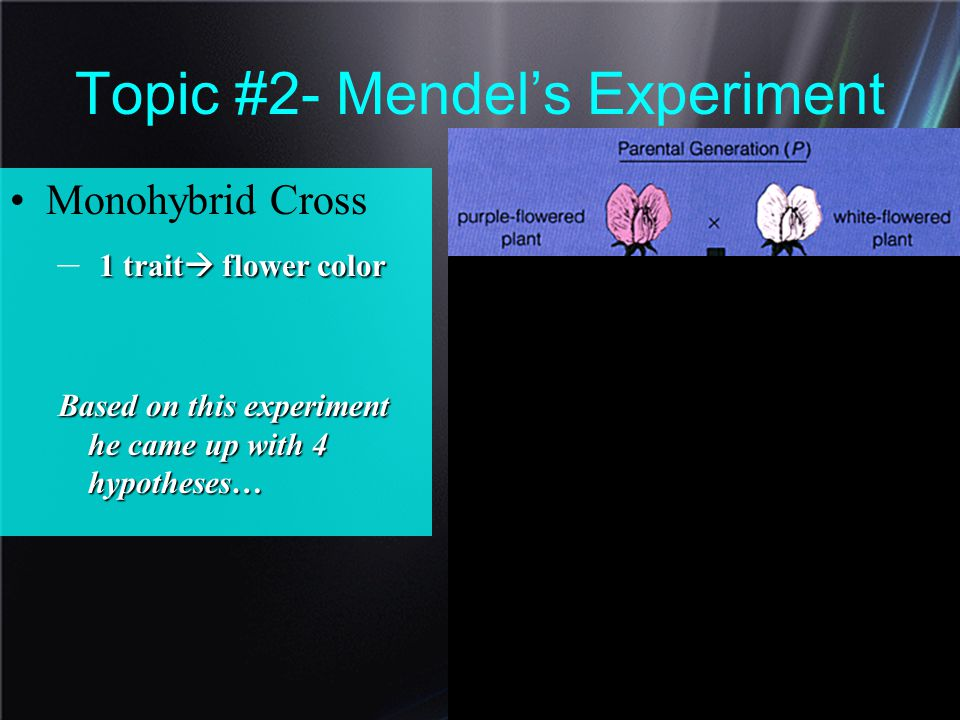 Topic #2- Mendel's Experiment Monohybrid Cross 1– 11– 1 trait flower color Based on this experiment he came up with 4 hypotheses…