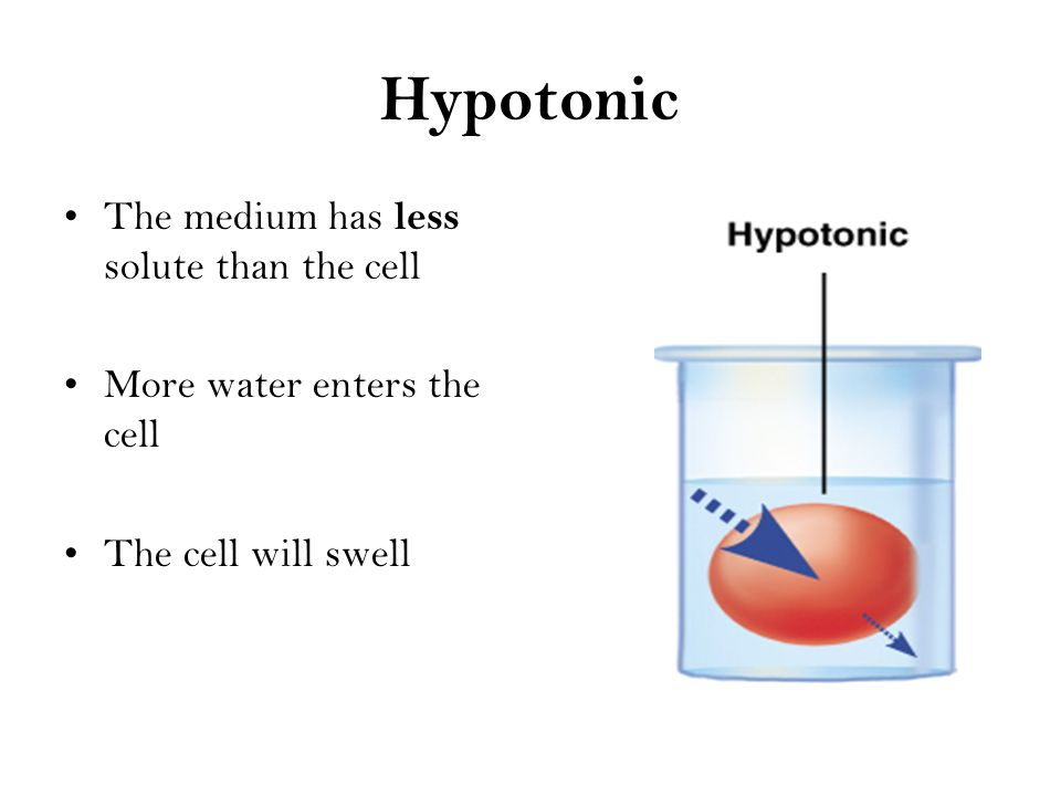 Hypertonic Medium has more solute than the cell More water leaves the cell than enters it Cell will shrink