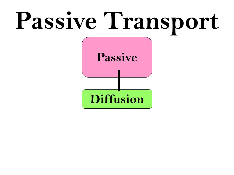 Passive Passive Transport Movement of materials that DOES NOT require energy (ATP)