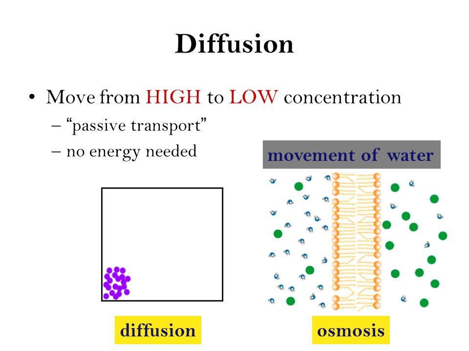 Passive Transport High Concentration Low Concentration