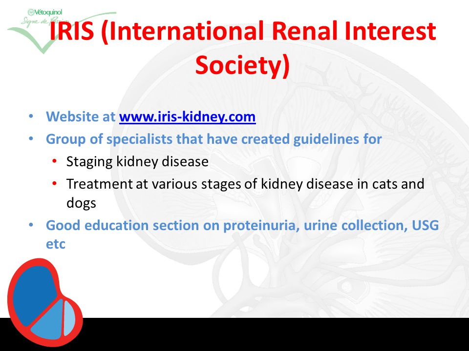 Renal Failure Multiple underlying causes with same outcome Progressive and dynamic condition Clinical signs vary and only appear when 66- 75% of functional tissue has been lost Replaced by fibrous or scar tissue GFR no longer adequate