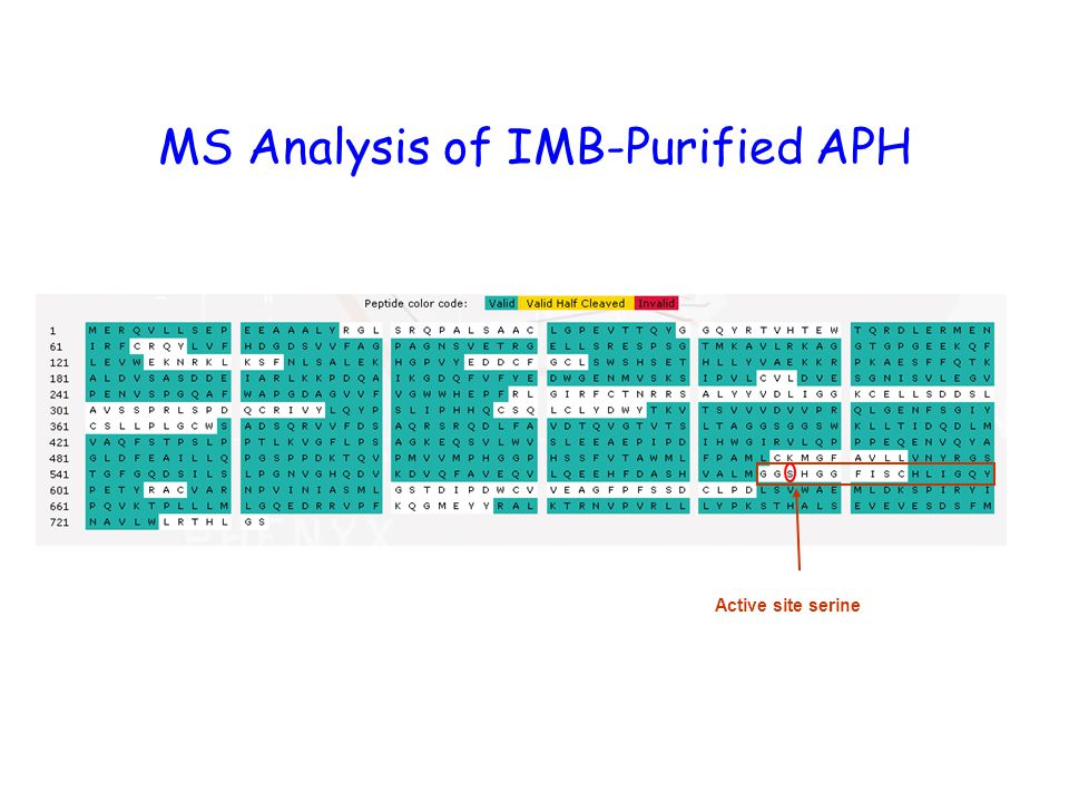 MS Analysis of IMB-Purified APH Active site serine