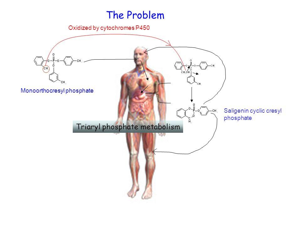 Triaryl phosphate metabolism The Problem Monoorthocresyl phosphate Oxidized by cytochromes P450 Saligenin cyclic cresyl phosphate