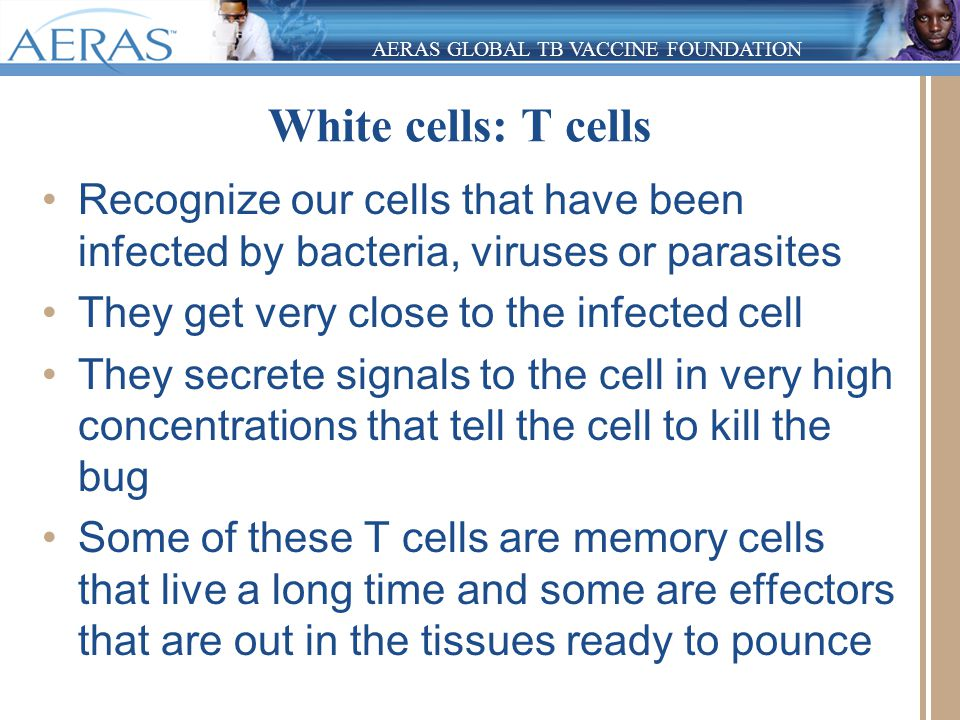 AERAS GLOBAL TB VACCINE FOUNDATION White cells: T cells Recognize our cells that have been infected by bacteria, viruses or parasites They get very cl