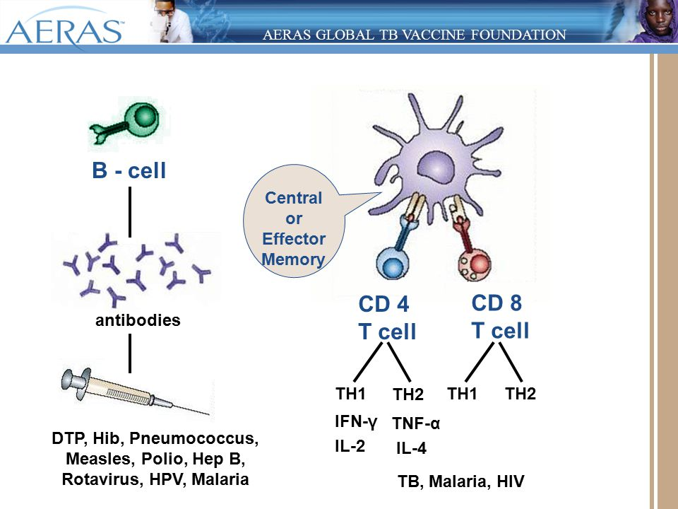 AERAS GLOBAL TB VACCINE FOUNDATION CD 4 T cell CD 8 T cell TH1 TH2 TH1 TH2 IFN-γ IL-2 TNF-α IL-4 B - cell antibodies DTP, Hib, Pneumococcus, Measles, Polio, Hep B, Rotavirus, HPV, Malaria TB, Malaria, HIV Central or Effector Memory