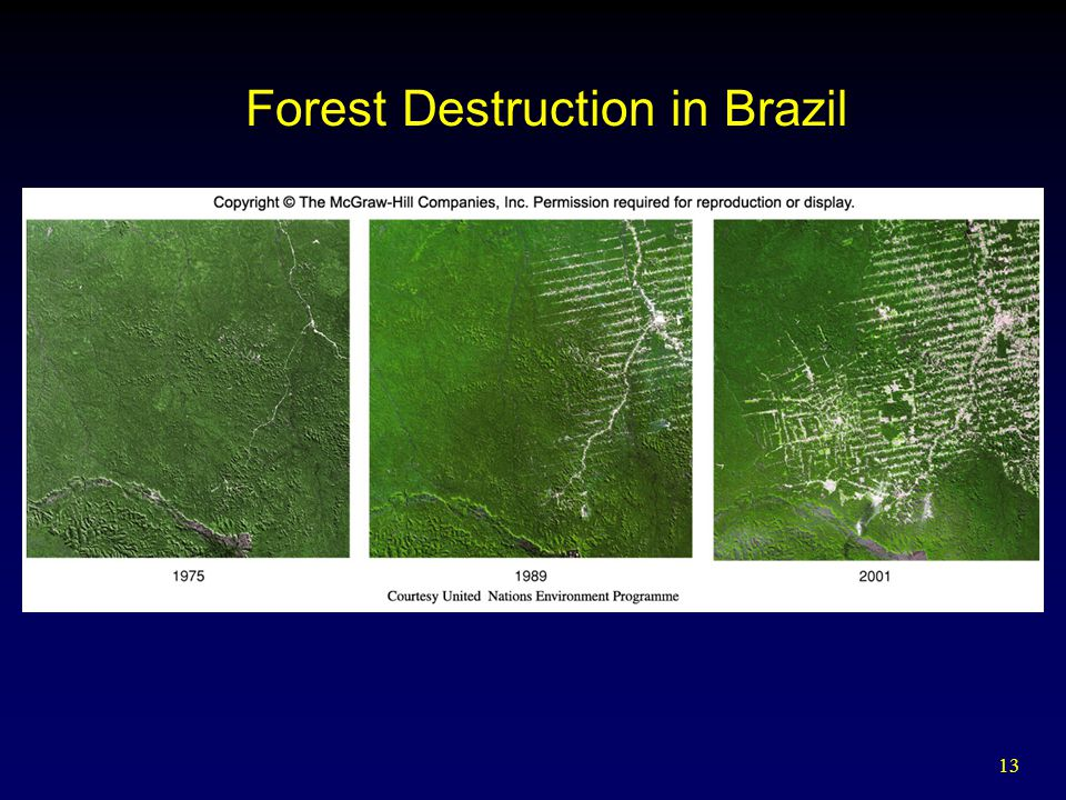 13 Forest Destruction in Brazil