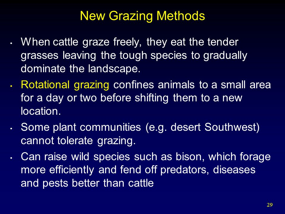 29 New Grazing Methods When cattle graze freely, they eat the tender grasses leaving the tough species to gradually dominate the landscape.