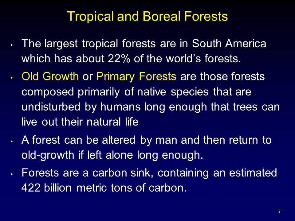7 Tropical and Boreal Forests The largest tropical forests are in South America which has about 22% of the world's forests.