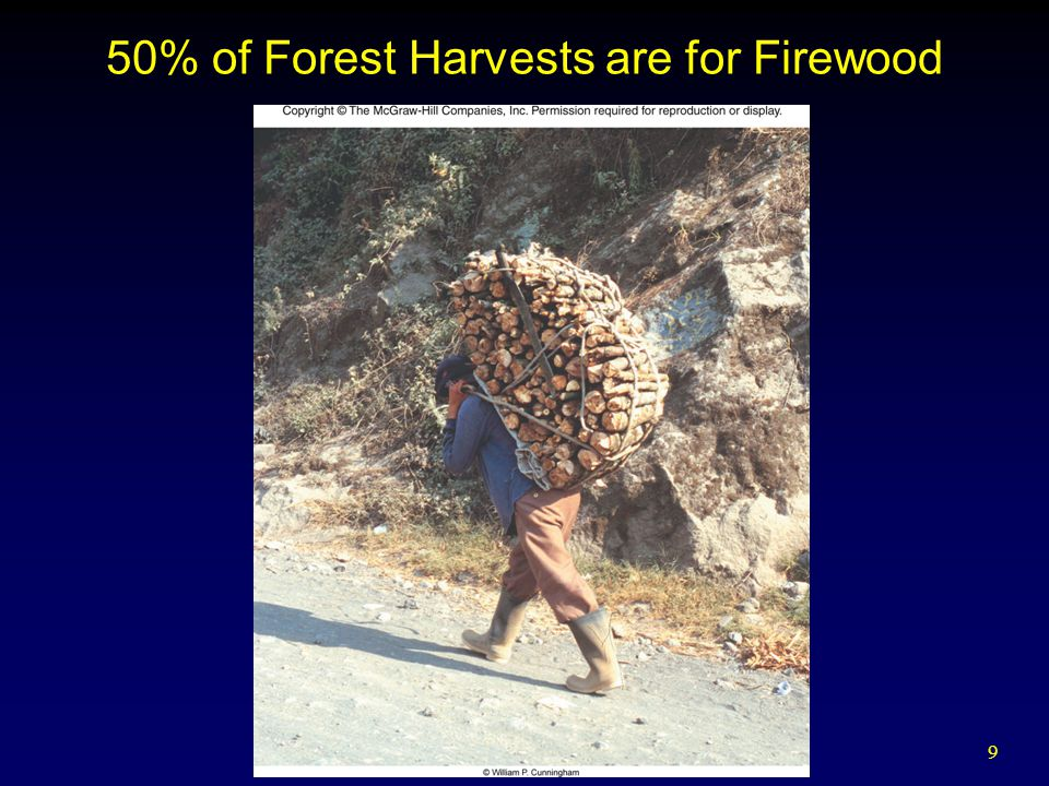 10 World Forests Monoculture forestry – Planting one species of tree for the purpose of harvesting timber Although monoculture forestry provides rapid wood fiber, it is normally not as diverse and does not provide the ecological benefits of natural forests