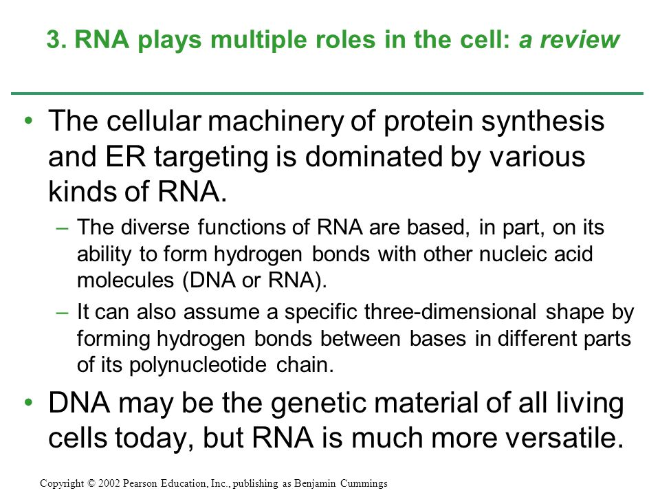 The cellular machinery of protein synthesis and ER targeting is dominated by various kinds of RNA. –The diverse functions of RNA are based, in part, o