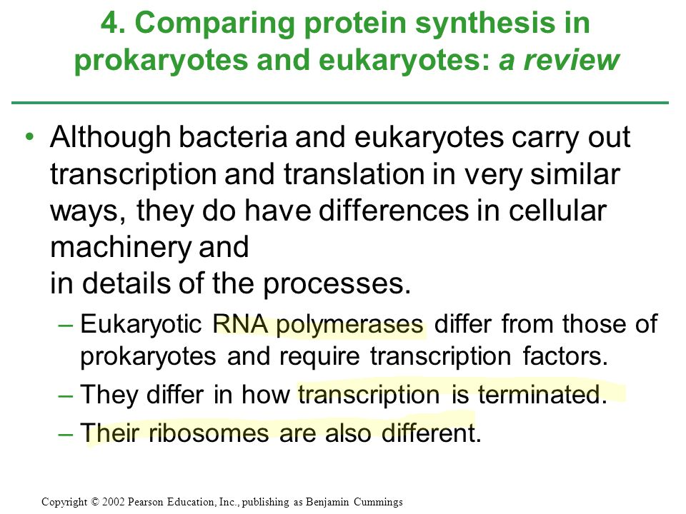 Although bacteria and eukaryotes carry out transcription and translation in very similar ways, they do have differences in cellular machinery and in d