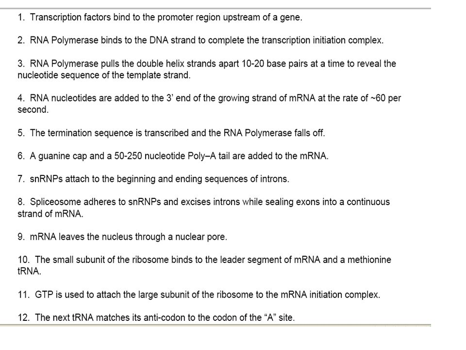 Initiation brings together mRNA, a tRNA with the first amino acid, and the two ribosomal subunits.