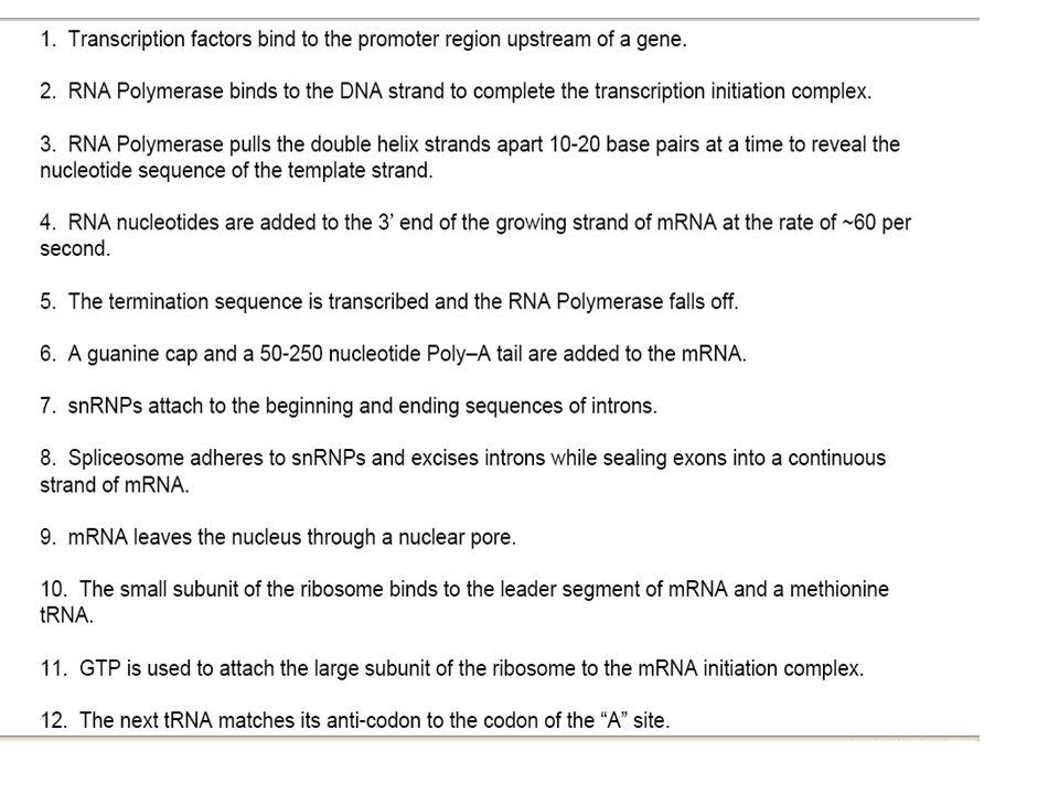 Fill out chart as we go Rep/Transcrip/Transla –Location –Start molecule –Process –End molecule