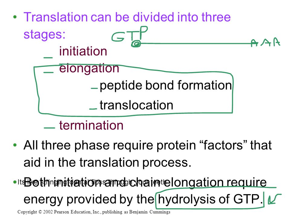 Translation can be divided into three stages: initiation elongation peptide bond formation translocation termination All three phase require protein ""