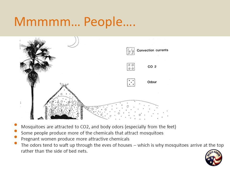 Mmmmm… People….