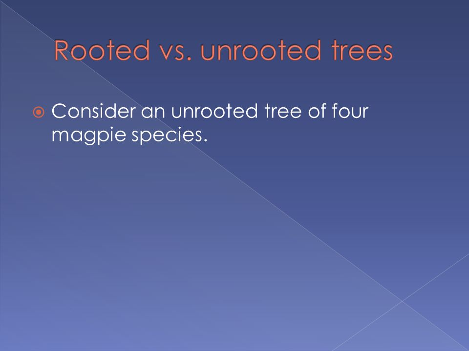  Consider an unrooted tree of four magpie species.