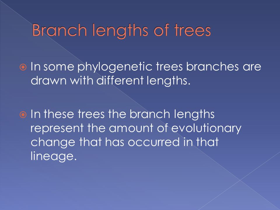  In some phylogenetic trees branches are drawn with different lengths.  In these trees the branch lengths represent the amount of evolutionary chang