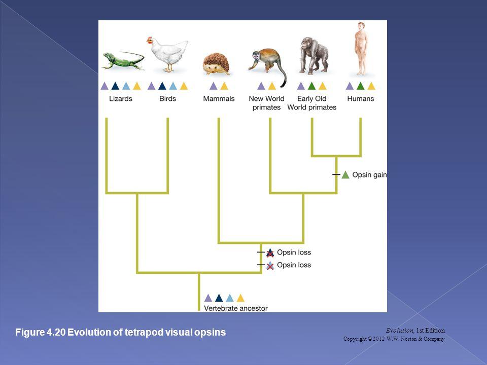 Evolution, 1st Edition Copyright © 2012 W.W.