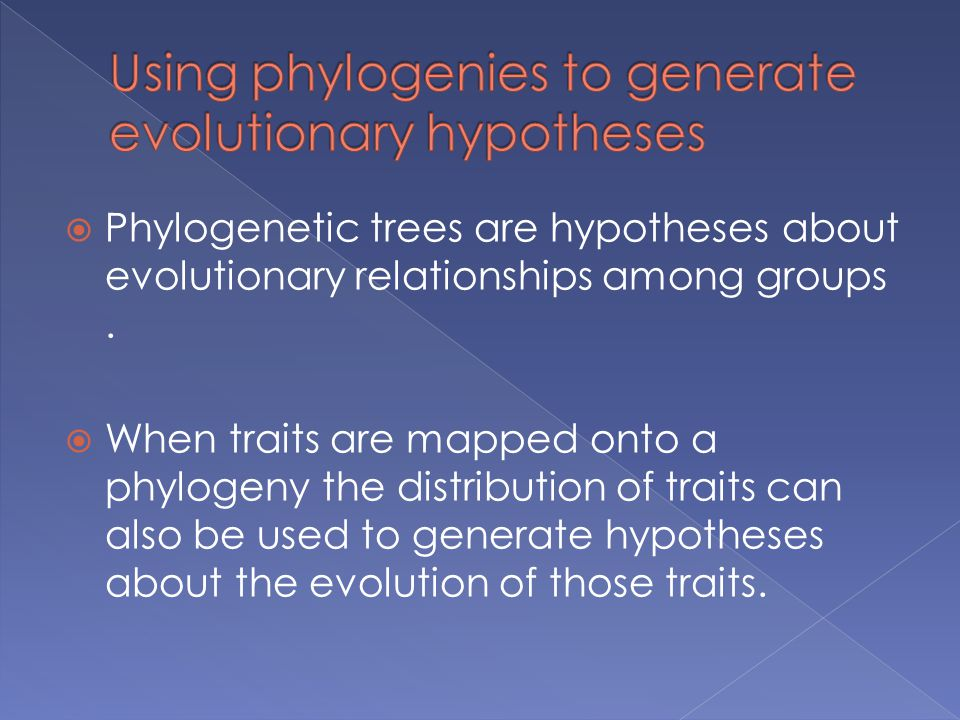  Phylogenetic trees are hypotheses about evolutionary relationships among groups.