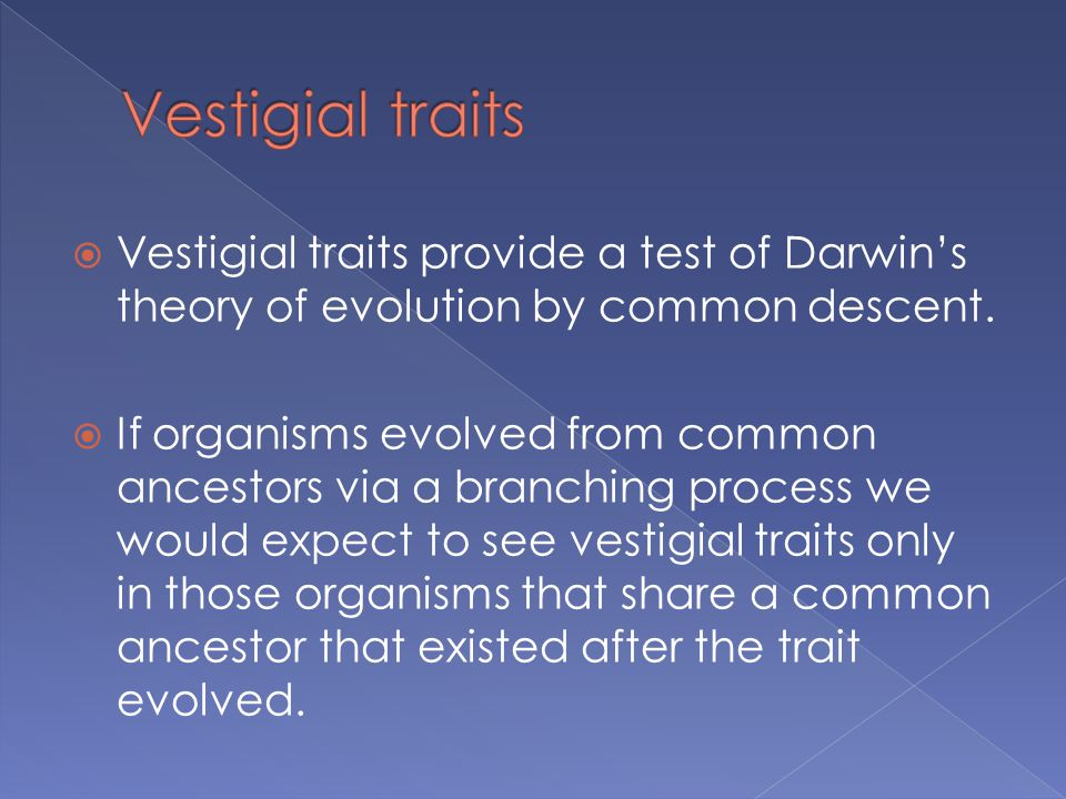  Vestigial traits provide a test of Darwin's theory of evolution by common descent.  If organisms evolved from common ancestors via a branching proc