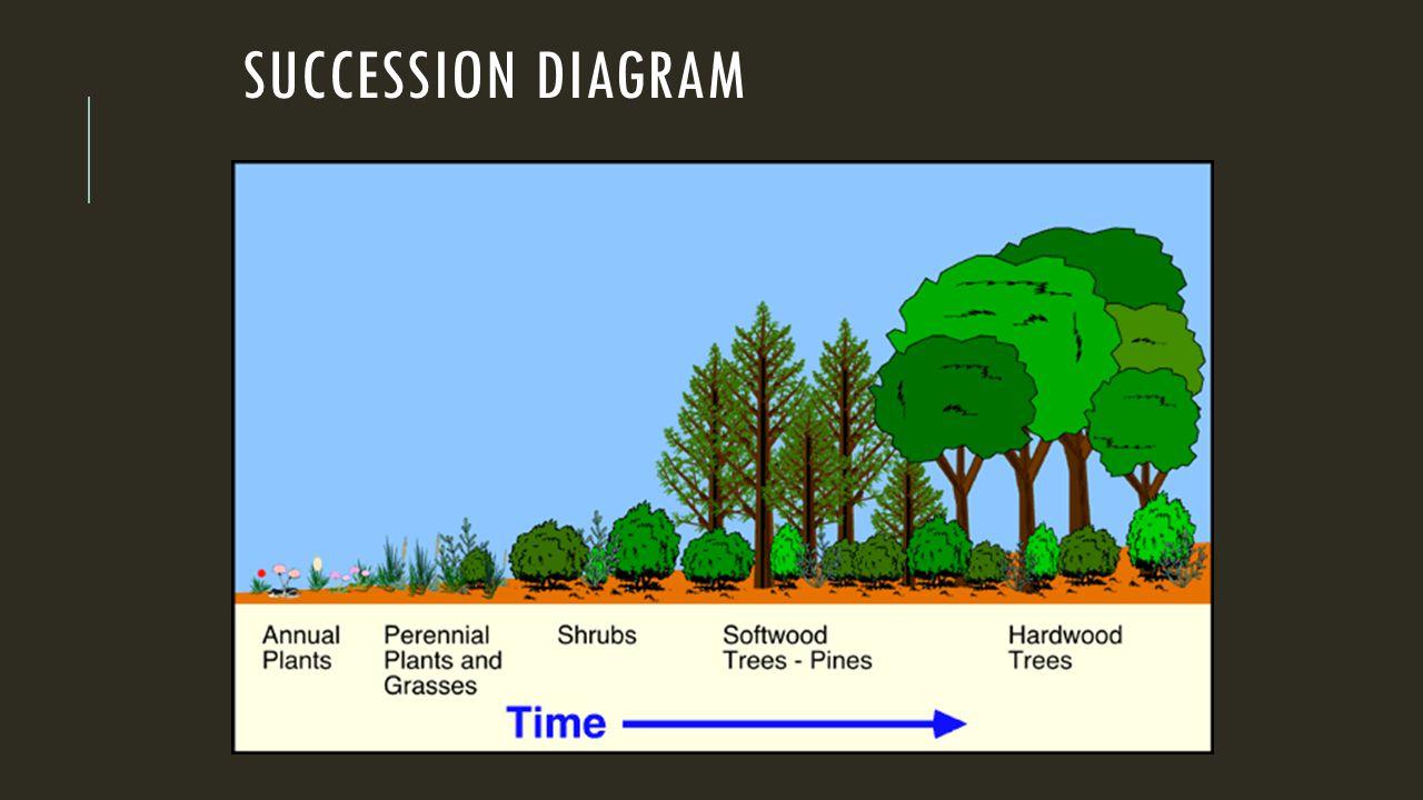 SUCCESSION DIAGRAM