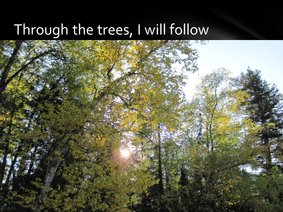 Through the trees, I will follow