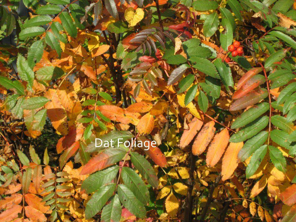 Dat Foliage