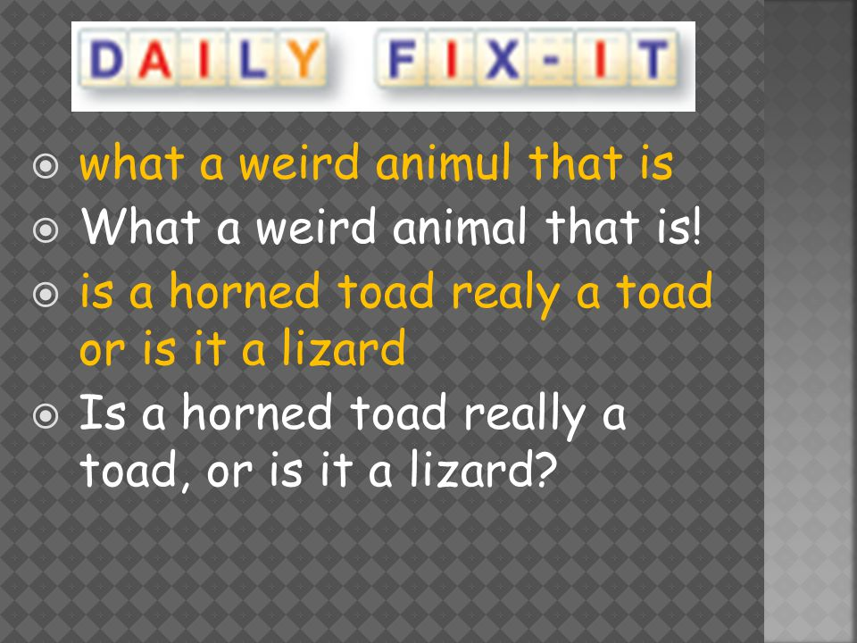  what a weird animul that is  What a weird animal that is.