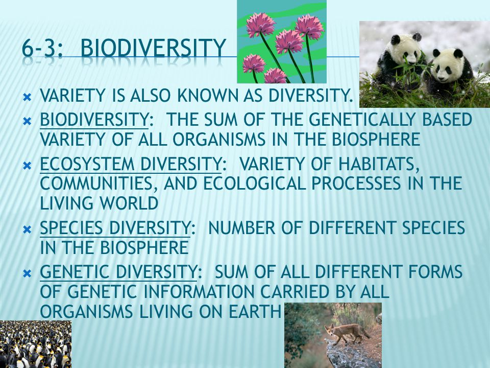  VARIETY IS ALSO KNOWN AS DIVERSITY.