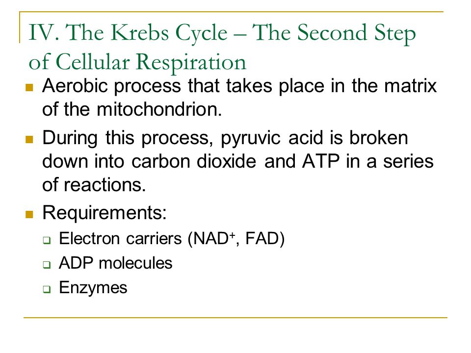 IV. The Krebs Cycle – The Second Step of Cellular Respiration Aerobic process that takes place in the matrix of the mitochondrion. During this process