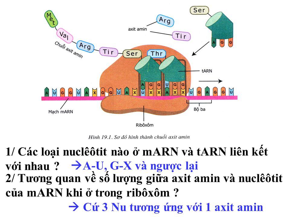 MET PRO CYS PRO THR Chuỗi axit amin