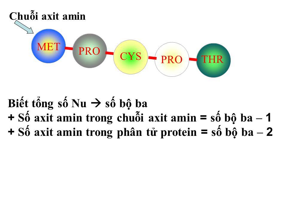 Vậy sự tạo thành chuỗi axit amin dựa vào những nguyên tắc nào.