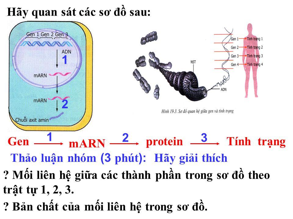 Tiết 19 : MỐI QUAN HỆ GIỮA GEN VÀ TÍNH TRẠNG I. Mối quan hệ giữa ARN và tính trạng : II.