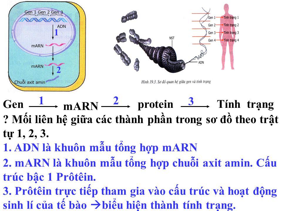 Hãy quan sát các sơ đồ sau: Gen mARN proteinTính trạng Thảo luận nhóm (3 phút ): Hãy giải thích .