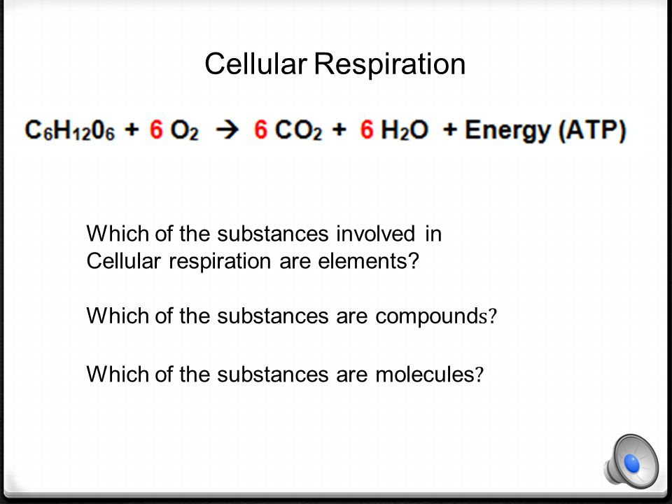 Which of the substances involved in photosynthesis are elements.